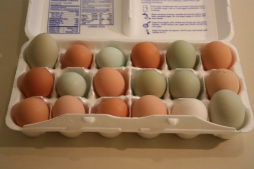Beautiful organic eggs