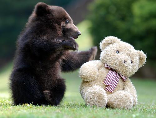 Bear freinds