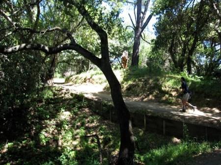 Cora Older Trail
