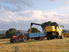 Mawcarse Harvest