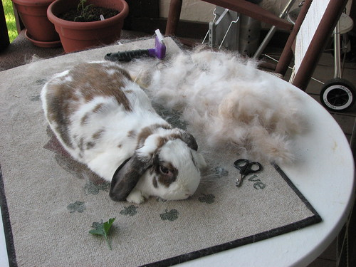 betsy after being brushed