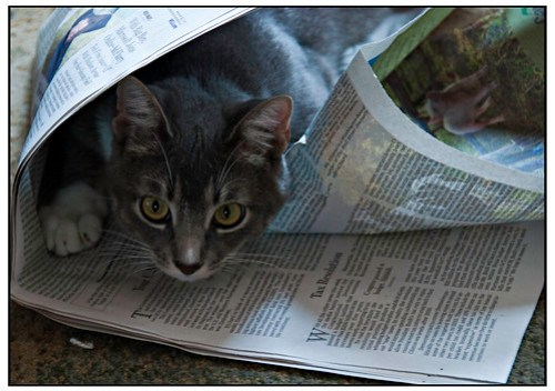Pippen Peruses the Newspaper