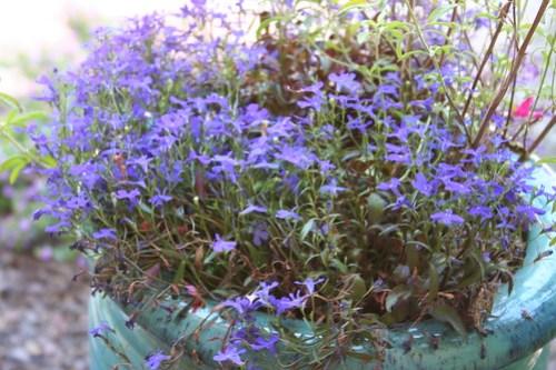 Lainey's Garden