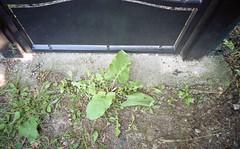 La vegetazione prenderà il sopravvento (Plate #2)