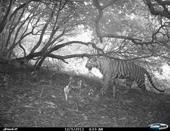 """Camera trap picture from Shendurney Widlife Sanctuary • <a style=""""font-size:0.8em;"""" href=""""http://www.flickr.com/photos/109145777@N03/13794528025/"""" target=""""_blank"""">View on Flickr</a>"""