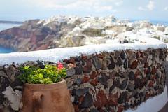 geraniums and Oia