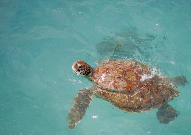 Turtles !