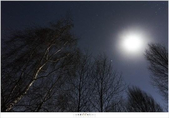 In het maanlicht  lijken de berken bijna in een eigen licht te schijnen