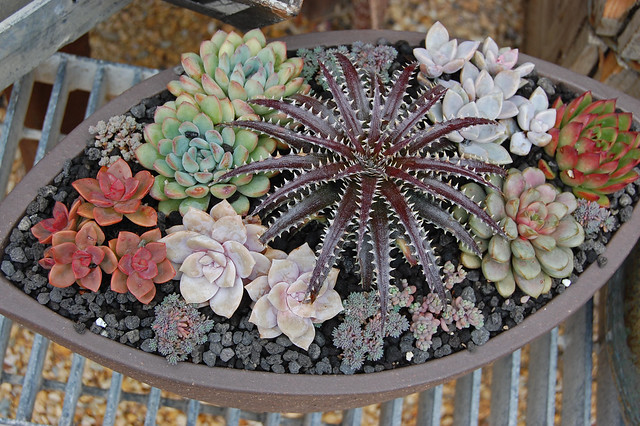 Dykia and friends