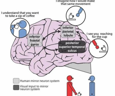 Some patients with schizophrenia have impaired ability to for Mirror neurons psychology definition
