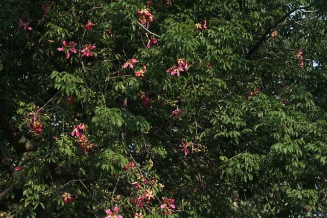 Delhi's Bandaged Moments – John Keats, Nehru Park
