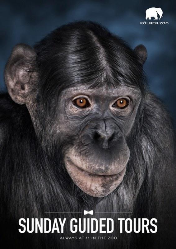Kolner Zoo - Monkey
