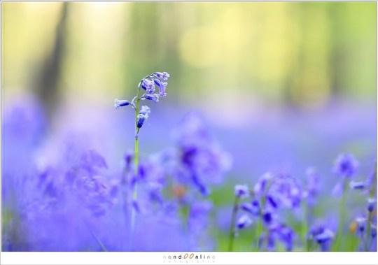 Lager bij de grond zijn de bloemen te zien die kop en hals boven de rest uitsteken.