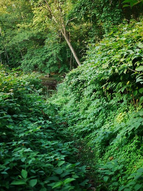 a narrow path through lush greenery