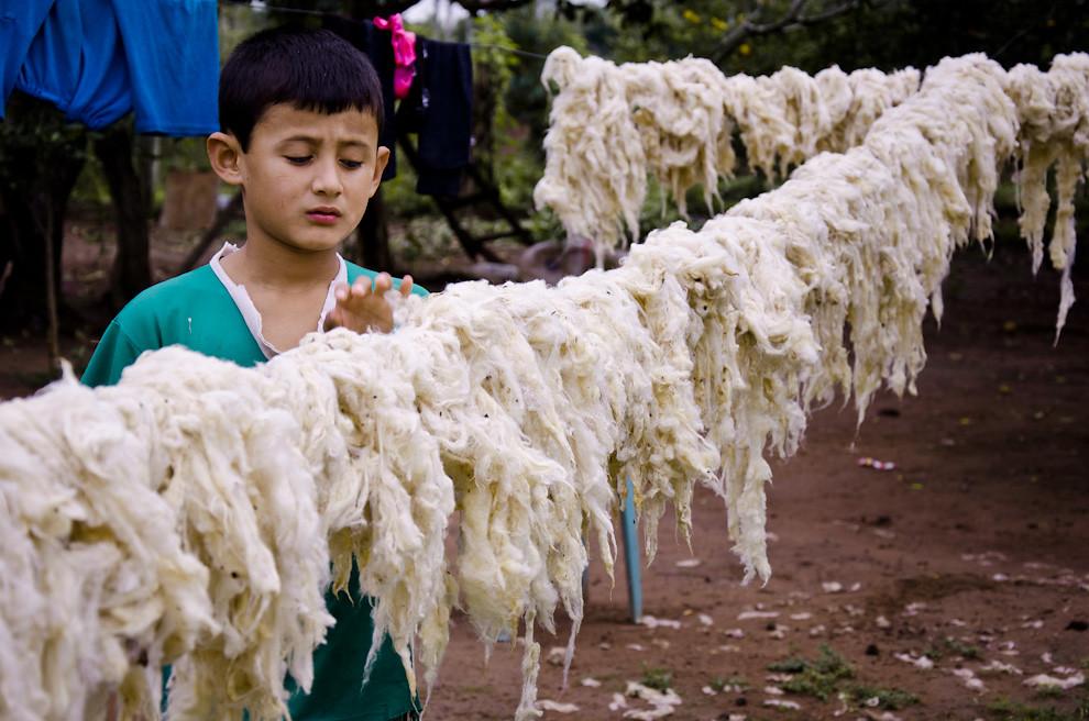Un niño ayuda a su mamá acomodando lana de ovejas en un improvisado tendido para secarlas al sol, en las afueras de la ciudad de San Miguel, departamento de Misiones, el pasado 24 de Junio.  (Elton Núñez)