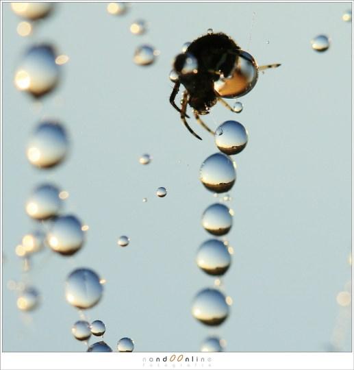 De spin als bewakers van de werelden die gevangen zijn in al die druppels