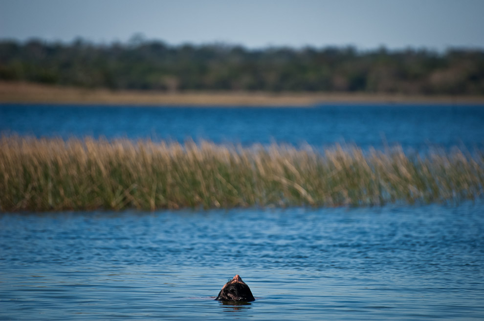 Un visitante se relaja en el agua transparente de Laguna Blanca el pasado domingo 21 de Septiembre, jornada cálida y agradable para el recreo al aire libre. (Elton Núñez)