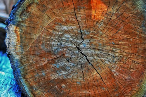 Dead Tree Edition