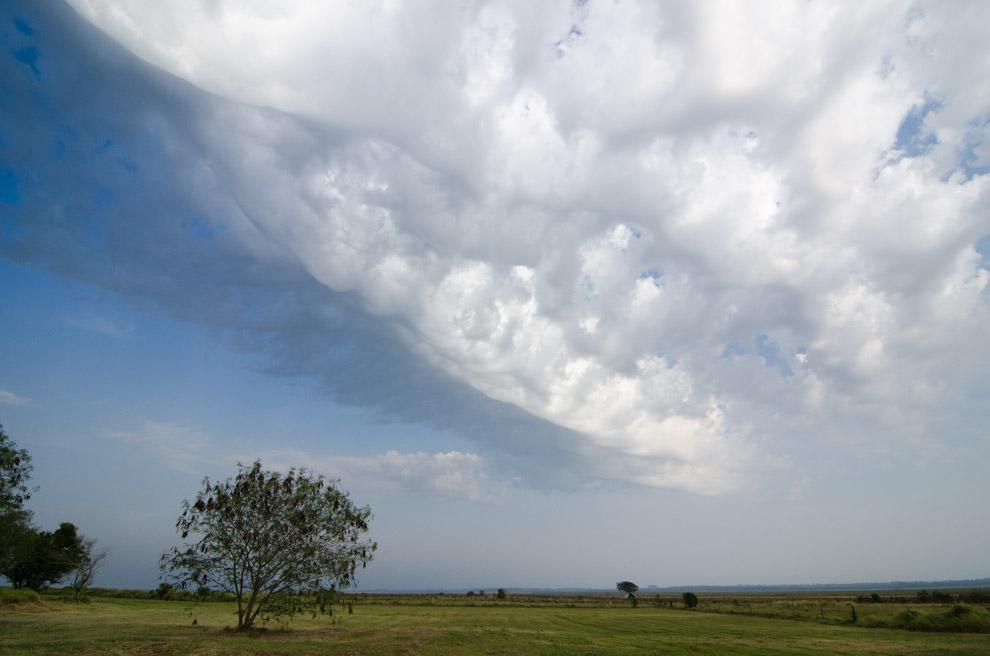 """En la """"Hacienda Graciela"""", sobre los arrozales, se forman cúmulos de nubes por la diferencia de temperatura, anunciando la llegada de tormentas severas como las que trae el mes de Septiembre. (Elton Núñez)"""