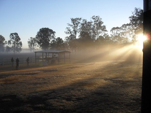 Blackbutt sunrise
