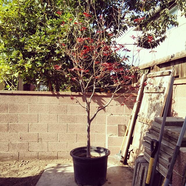 My new tree... #workinprogress