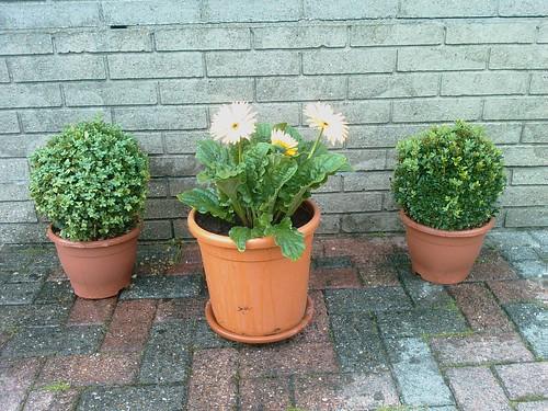 Mijn nieuwe plantjes...