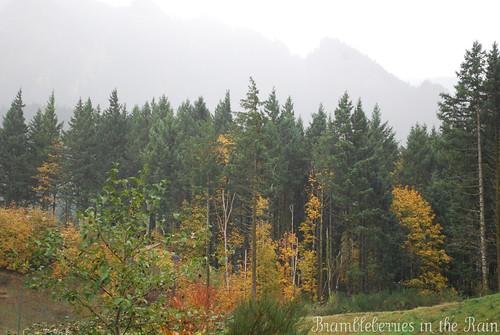 Rainy Backyard November 2010