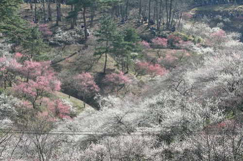 Prunus park of me city