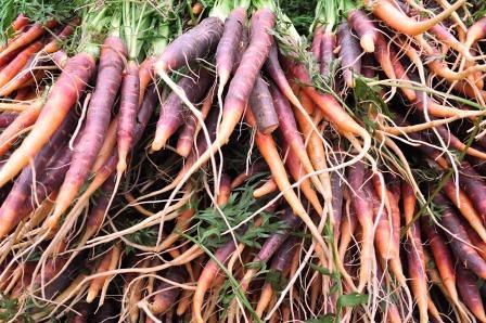 Purple Carrots Farmers Market