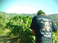 Insider's Wine Tour in Baja | Valle de Guadalupe