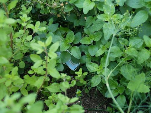 My herb garden now