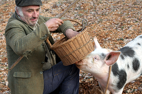 truffle hunter and his pig