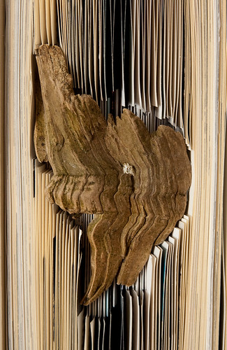 Forgotten Knowledge - detail of driftwood