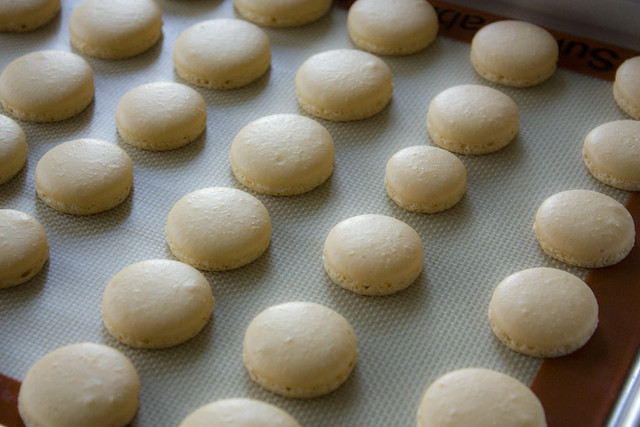 Basic French Macaron Shells