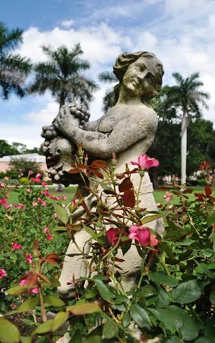 Rose Garden at the Ringling Museum, Sarasota, Fla.