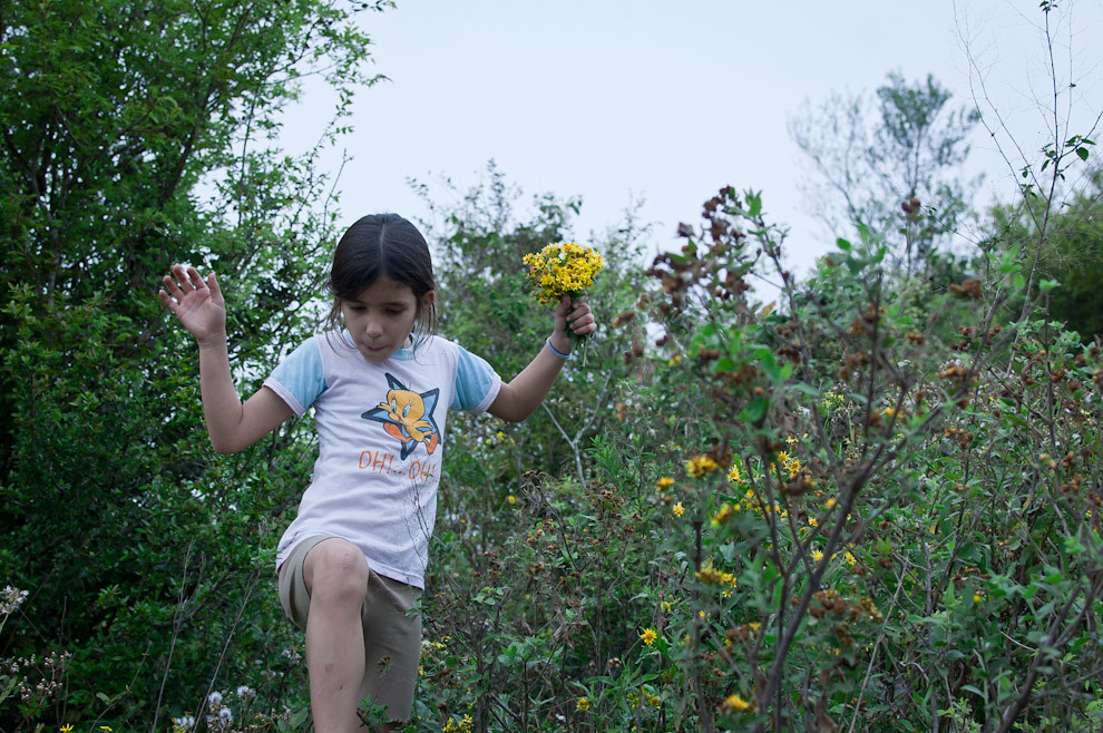 Alexandra, una niña de 11 años recoge para su mamá flores de los campos cerca de una granja en Caapucú el domingo 12 de Setiembre. (Elton Núñez - Paraguari, Paraguay)