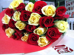 Island Rose Flowers