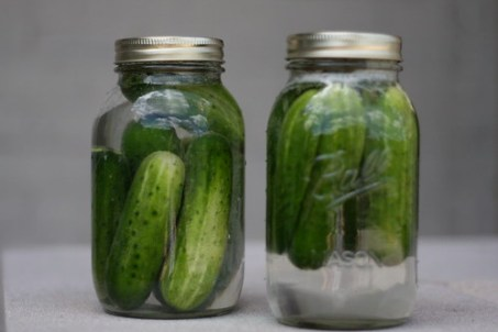 making homemade pickles