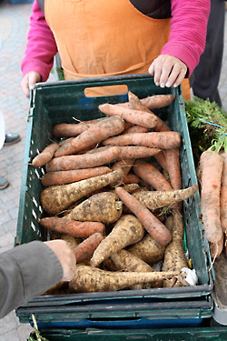 parsnips and carrots