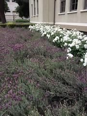 Flowers at Pomona College