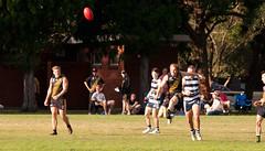 Balmain Tigers v Camden Cats AFL Division1 May 27 2017 00043