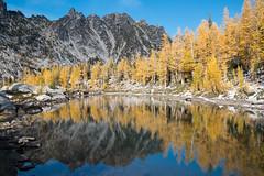 The softest trees. Leprechaun Lake