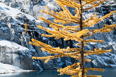 Larch, snow, and polished stone