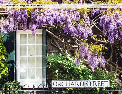 04-orchardst.jpg