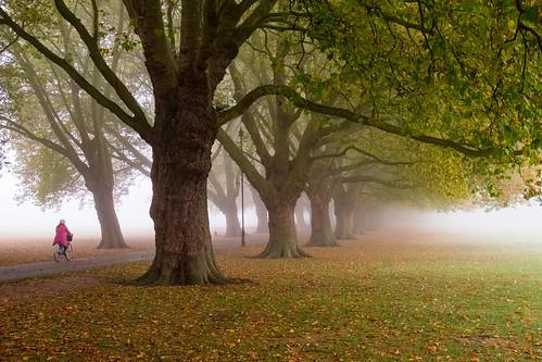 Misty Jesus Green