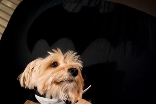Bat hound!