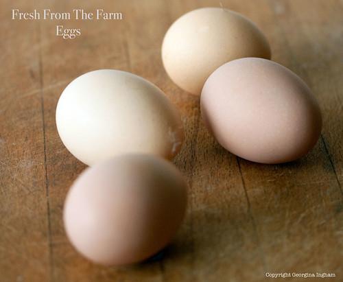Sylvia's Farm Fresh Eggs
