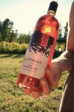 La Stella, bottled sunlight