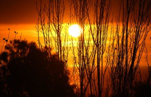 Crepúsculo - ▶MacLeod◀