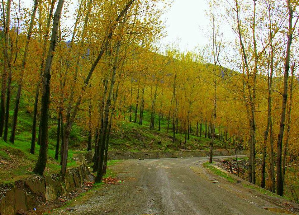 #travelbloggerindia #kashmirtourism #offbeatplacesinkashmir #travelblogindia #travelblogkashmir #kokernag